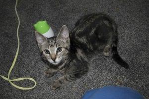 Kitten Wire